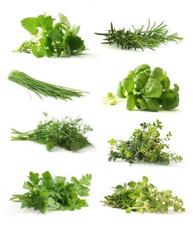 Fresh herbs Stock Photo - 4624373