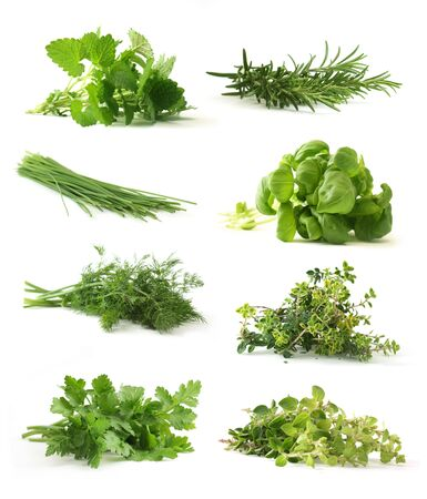 Fresh herbs Stock Photo - 4624373