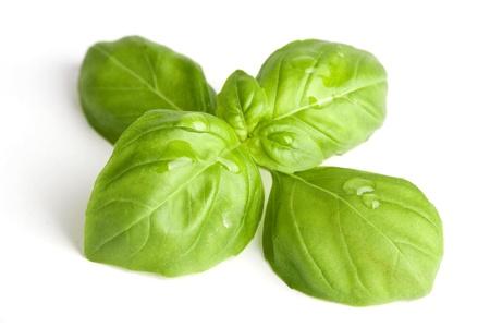 Close-up de feuilles de basilic frais avec des gouttes d'eau