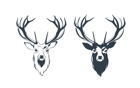 Vector Illustration of a Male Red Deer Head  イラスト・ベクター素材