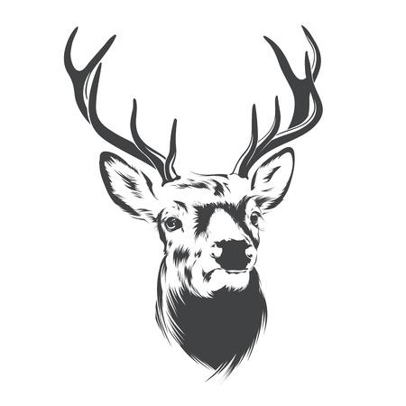 Herten hoofd op witte achtergrond