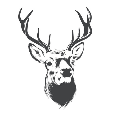 Deer Head on  White Background