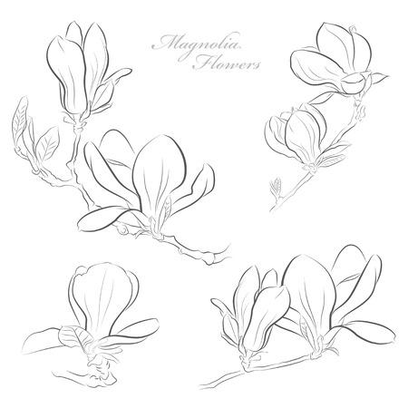 magnolia: Magnolia flowers Illustration