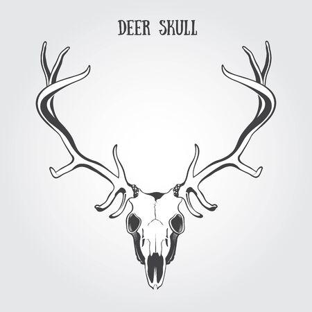 stag horn: Deer Skull