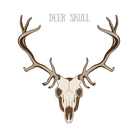 deer skull: Deer Skull