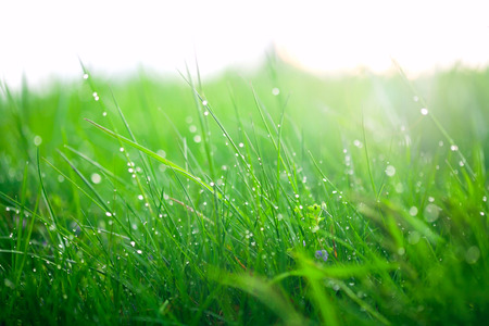 Green grass with dew drops Banque d'images