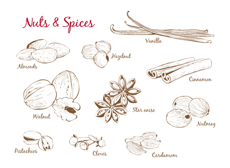 Hand Drawn Vector Set of Spices and Nuts in Outline Style