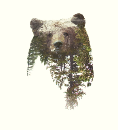 Double Exposure Portrait of Bear and Green Forest.