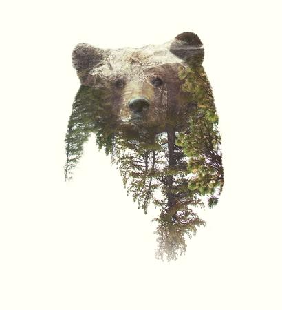 oso blanco: Exposición Doble Retrato de oso y bosque verde. Foto de archivo