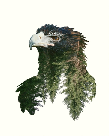 Double Exposure Portraits of Eagle and Tree Branch