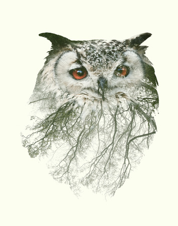 올빼미와 나뭇 가지의 두 번 노출 초상화