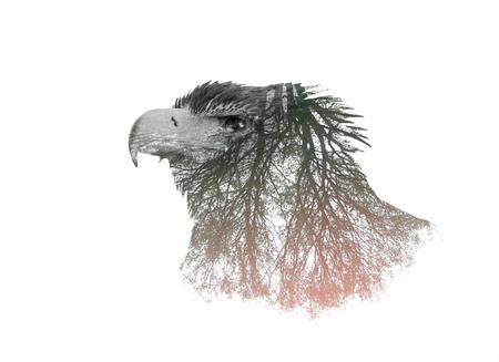 독수리와 나뭇 가지의 두 번 노출 초상화