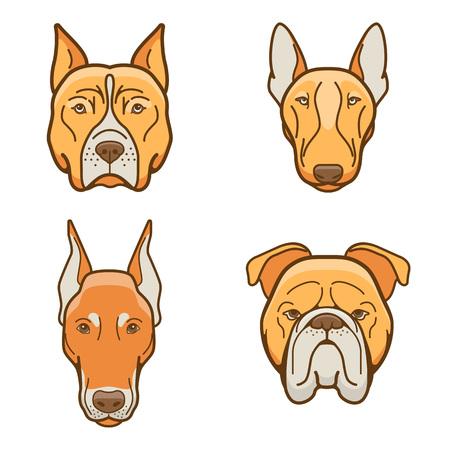 Dog faces of various breeds dobermann, bulldog, pitbull, Pit Bull Terrier