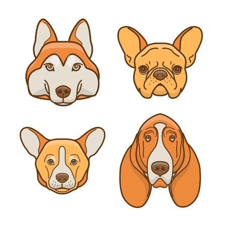 Dog faces of various breeds: basset hound, husky, corgi, french bulldog
