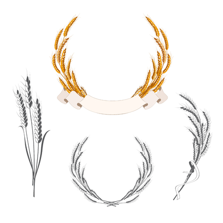 wheat grain: Set of wheat ears with banner and ribbon. Decorative elements for bakery badges
