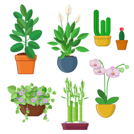 Set of house plant and flowers in pots on white background
