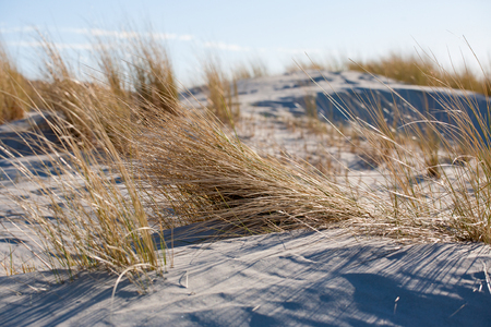 Landscape with sandy beach and dune grass on the North Sea Stock Photo