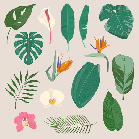 Set of tropical leaves and flowers Illustration