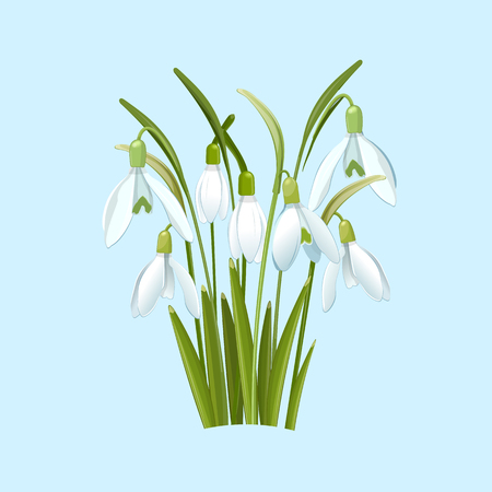 Snowdrops flowers on a blue background