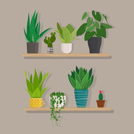 Set of green indoor house plants in pots on the wooden shelf.  Vector illustration Illustration