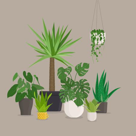 Set of green indoor house plants in pots. Vector illustration Illustration