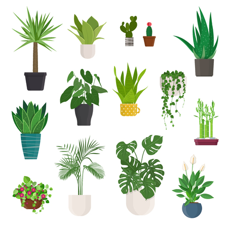 Set of house plant and flowers in pots on white background. Raster version