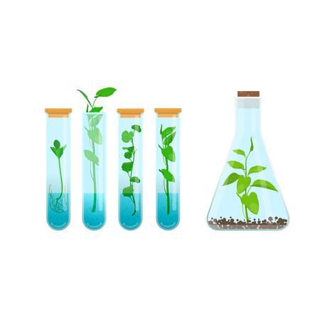 Cultivo de tejidos vegetales in vitro. Plantas en tubos de ensayo. Ilustración vectorial sobre fondo blanco