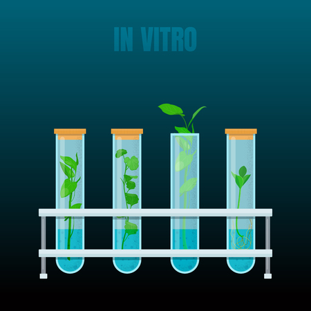 In vitro plant tissue culture. Plants in test tubes. Vector illustration on dark background Illustration