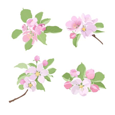 Apple tree branches with flowers and buds on white background. Vector illustration