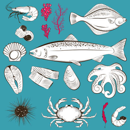 Set of hand drawn seafood and fish. Shrimp, fish, scallop, octopus, sea urchin and crab. Vector illustration 向量圖像