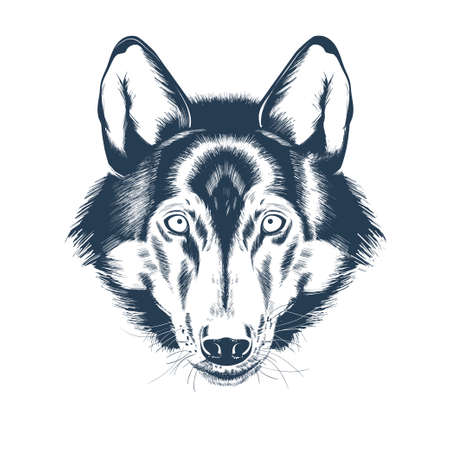 Portrait of a wolf head. Wolf face drawing sketch. Realistic hand drawn vector illustration 向量圖像