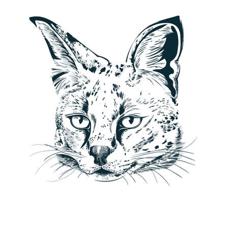 Realistic hand-drawn sketch of serval. Serval wild cat portrait. Vector illustration on white background