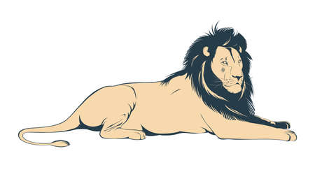 Big male lion lying on white background. Vector Illustration