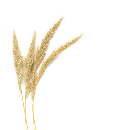 Yellow wheat on wooden background top view, Dried stems  meadow grass isolated on white background