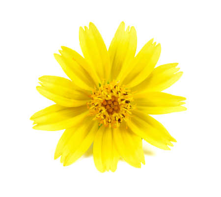 clr: yellow flowers isolated on white background