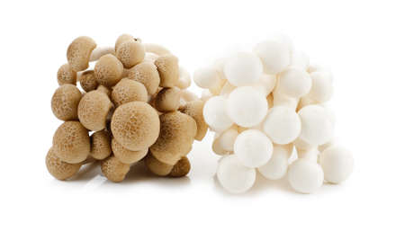 White-Brown beech mushrooms, Shimeji mushroom, Edible mushroom isolated on white background
