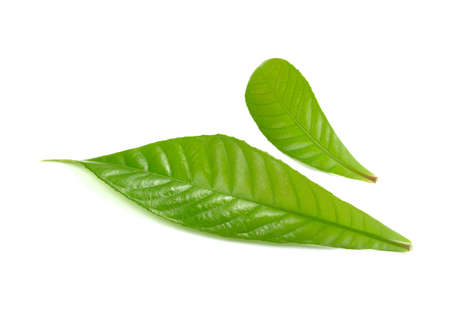 forestation: green  leaves isolated on white