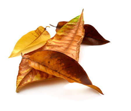 dry autumn leaves on White background