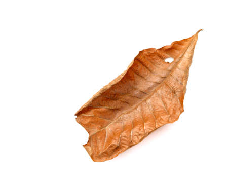 royalty free: dry leaf closeup on the white background Stock Photo