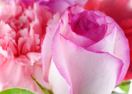 Background consists of pink roses and carnation Stock Photo