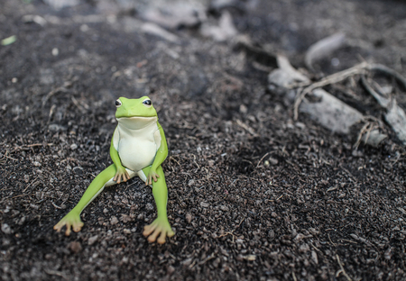 dry land: Frog is on dry land