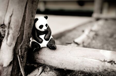 lonely: Lonely Panda Stock Photo