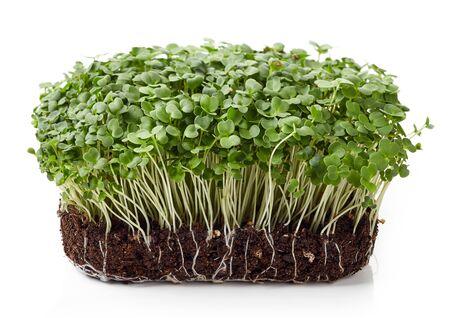 Fresh arugula sprouts isolated on white background 版權商用圖片