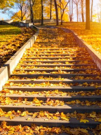 De tredeweg van de steen met gekleurde bladeren op zonnige dag
