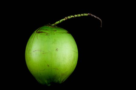 young tree: A single young coconut isolated against a black background Stock Photo