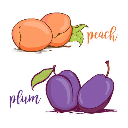 Peach and plum sketch style vector illustration isolated on white background. Hand drawn couples of fresh ripe peaches and plums
