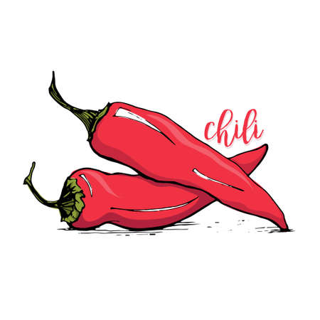 spicy chilli: Red chilli pepper sketch style vector illustration isolated on white background. Spicy chili