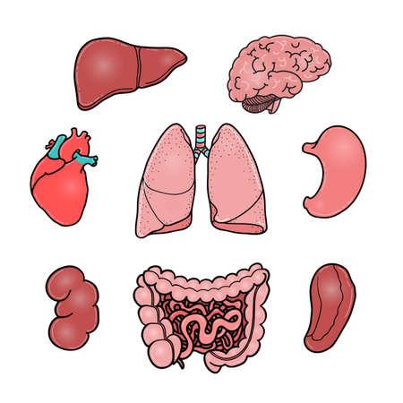 Set of human internal organs brain heart liver kidney banco de imagens set of human internal organs brain heart liver kidney intestine stomach lungs spleen cartoon vector illustrations isolated on ccuart Choice Image