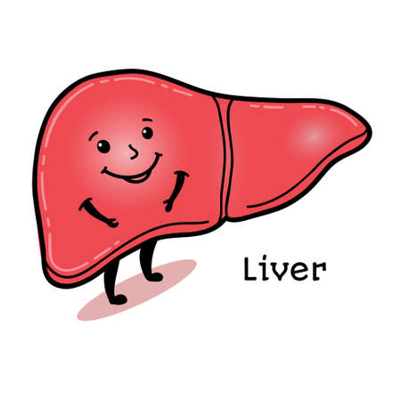 bile: Cute and funny human liver character, cartoon vector illustration isolated on white background. Healthy smiling liver character with arms and legs