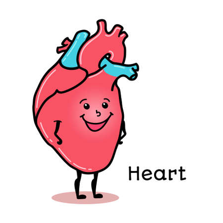 Cute and funny human heart character, cartoon vector illustration isolated on white background. Healthy smiling heart character with arms and legs Illustration